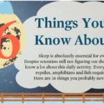 16 Amazing Facts On Sleep You May Not Know – An Infographic