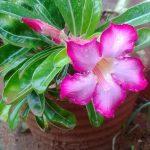 A Lovely Flower In the Rain….