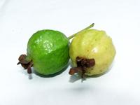 guava-1555438