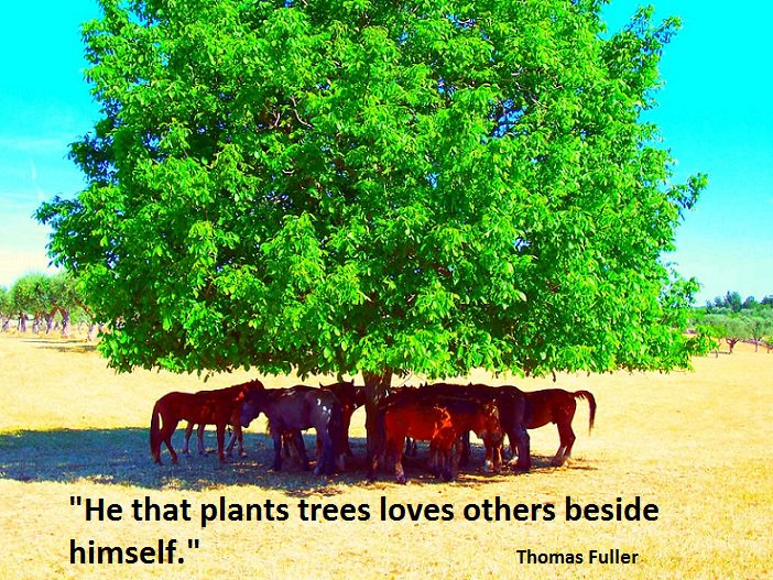 Trees Integral Part Of Us