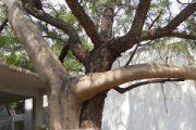 Tree Love